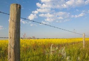 Rural Fence Post & Field