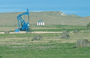 Pump jacks and alfalfa field in South Dakota